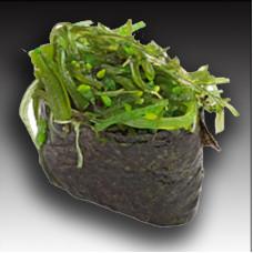 Хиящи(водоросли)